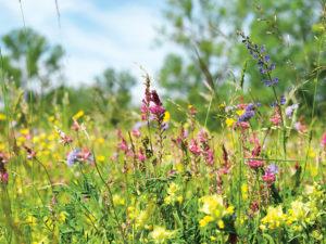 Blühende Wiesen im Frühling und Sommer