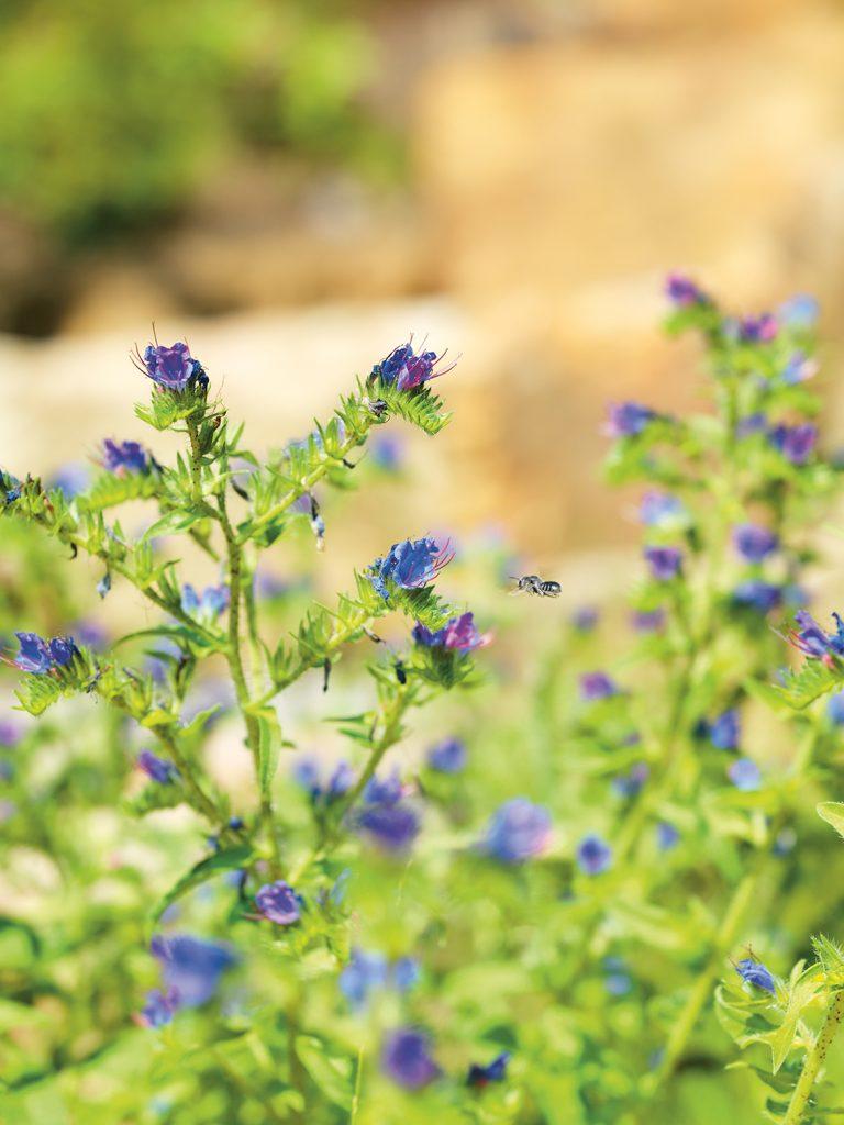 Biene fliegt zur Pflanze