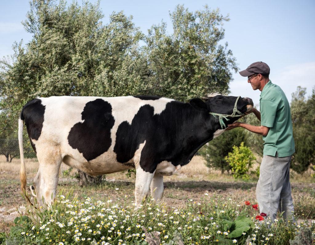 Farmer mit Kuh