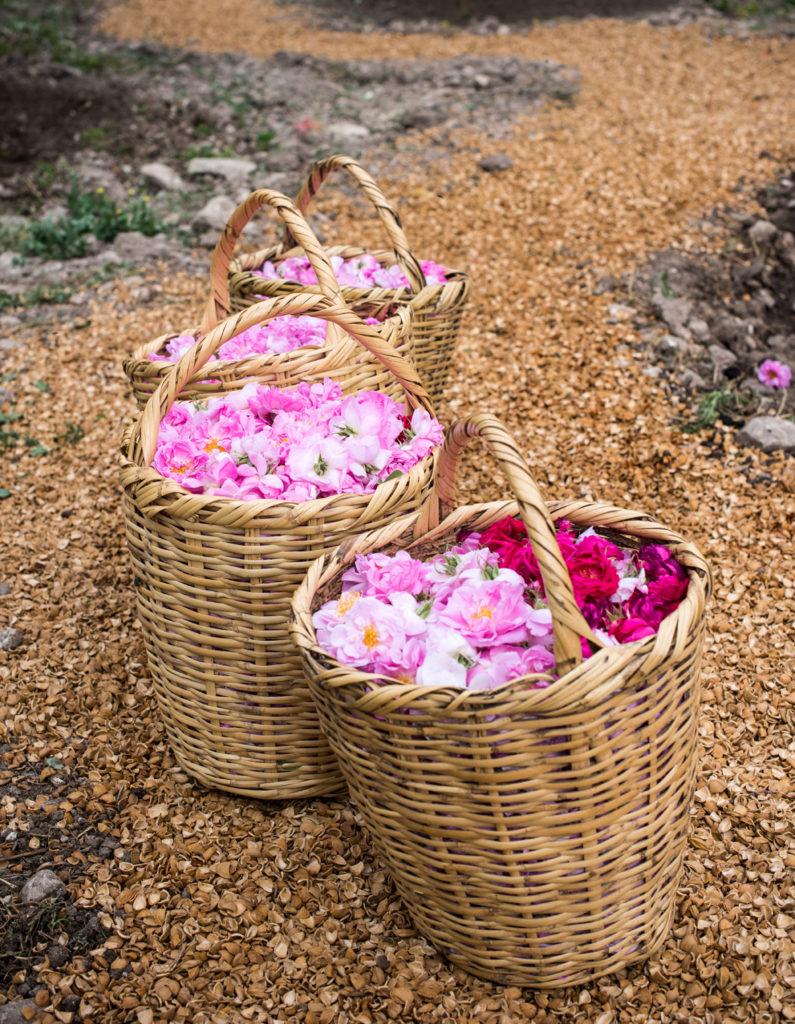 Körbe mit Rosenblättern