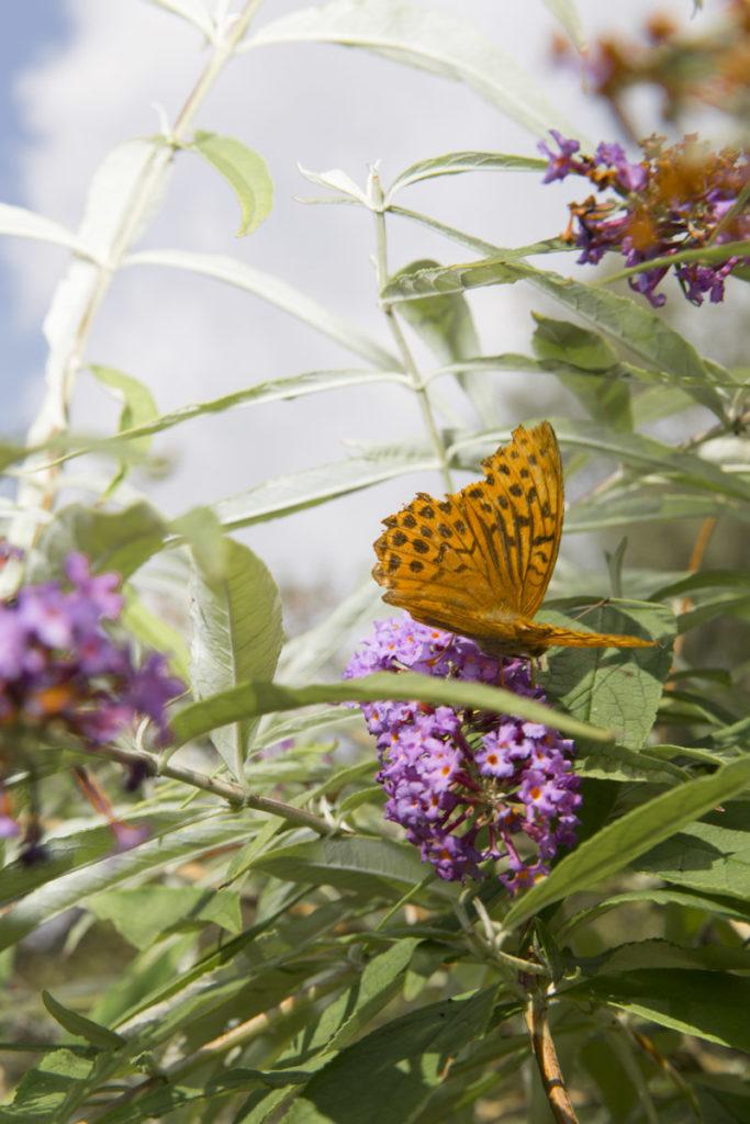 Werde Magazin - Ein Garten für Insekten