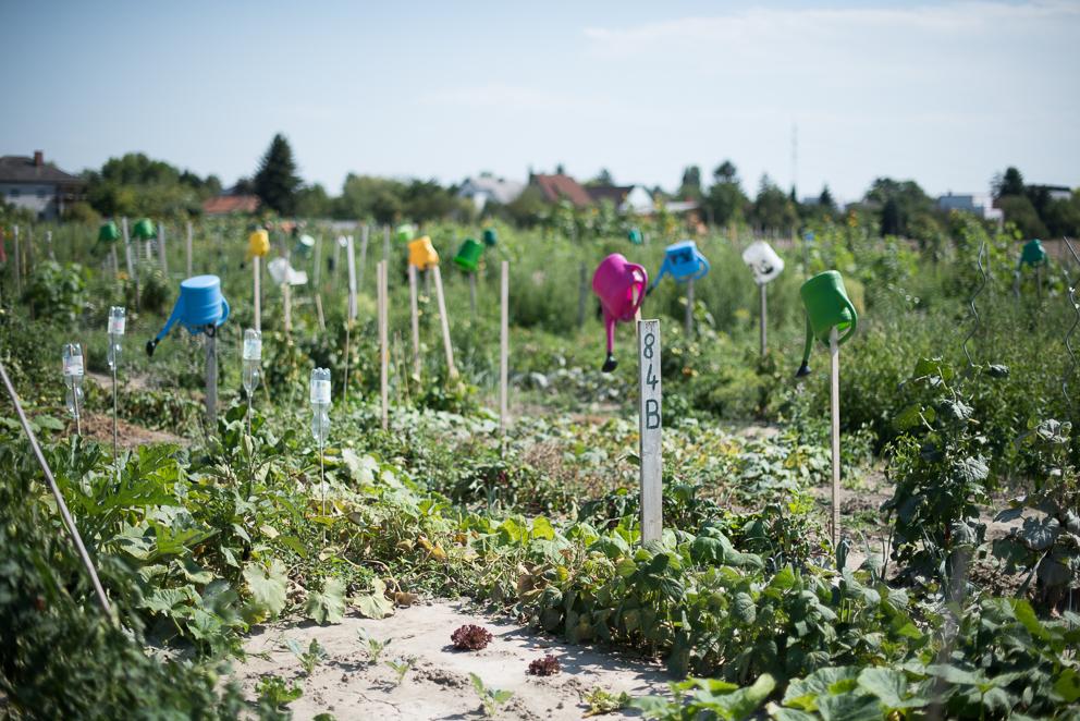 Werde Magazin - Wien - Gärtnern