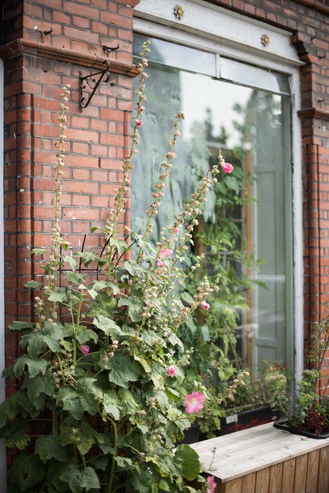 Werde Magazin - Kopenhagen - TagTomat - Gemüse