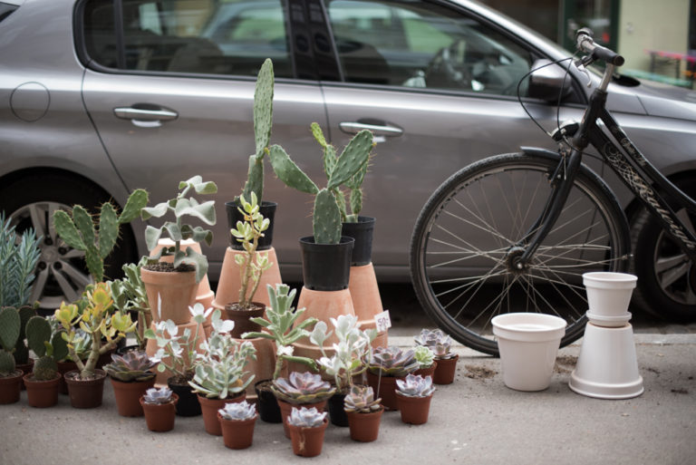 Werde Magazin - Kopenhagen - Kaktus