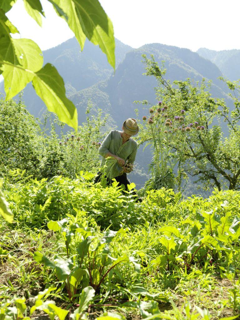 Ein Mann erntet auf einem Feld Obst und Gemüse