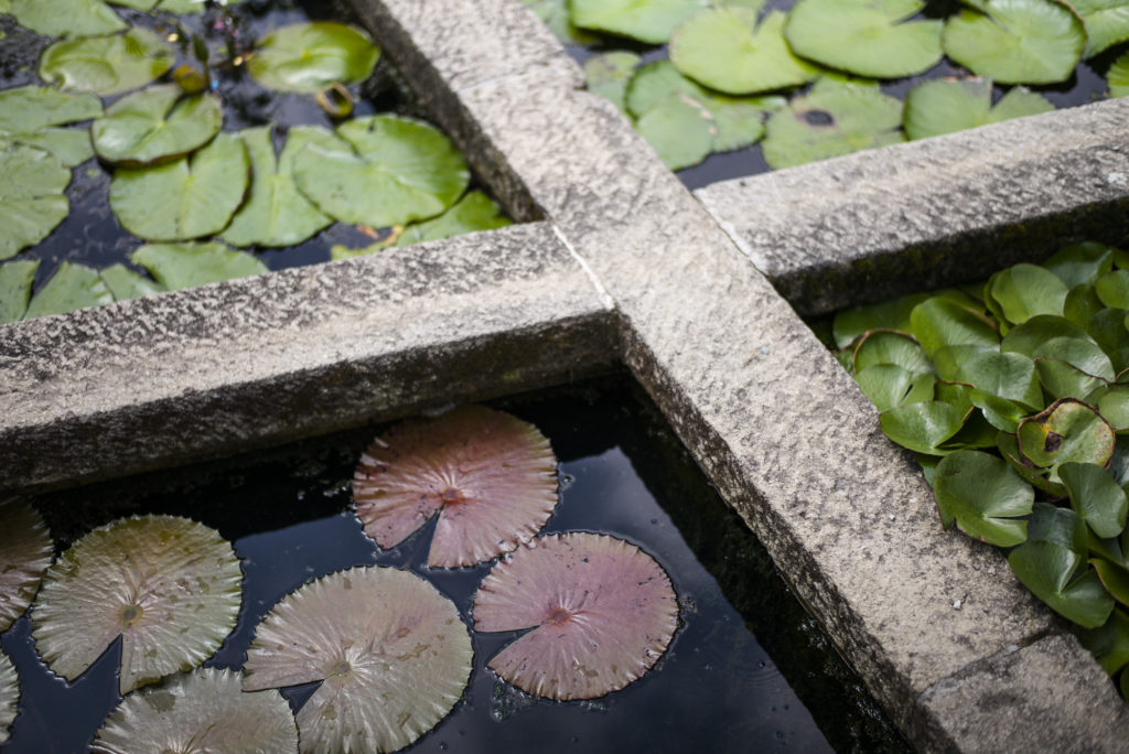 Werde Magazin - Orto Botanico