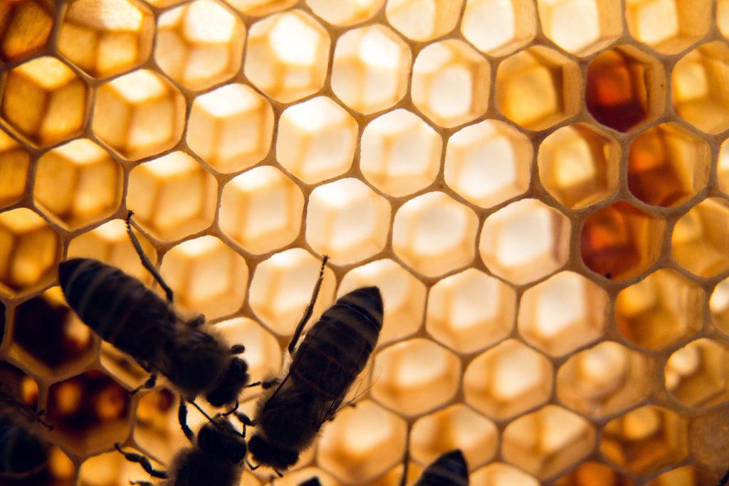 Werde Magazin Honigbiene