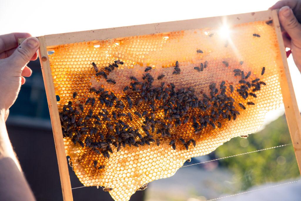 Werde-Magazin Bienen