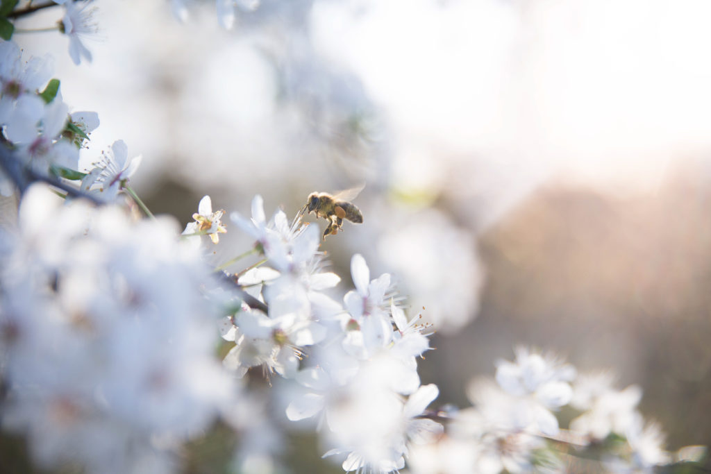 Werde-Magazin Honigbiene