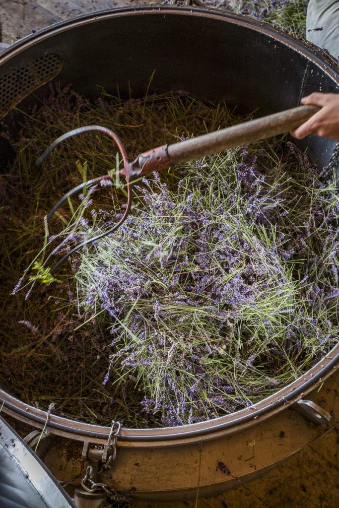 Werde Magazin-Lavendel