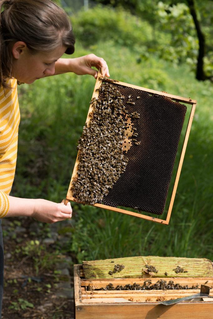 Werde Magazin-Mit Bienen leben