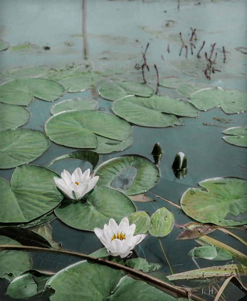 Kolorierte Naturfotografien mit Seerosen von Josef Hanell