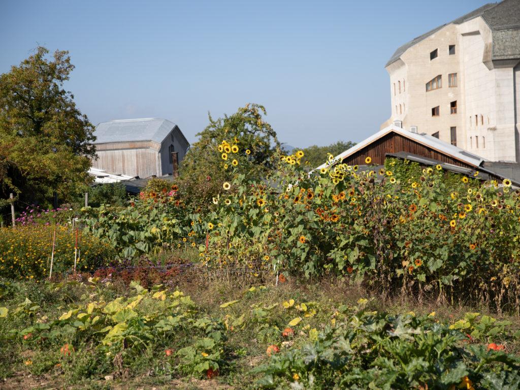Living Farms: Das Wissen sammeln der Bio-Landwirtschaft
