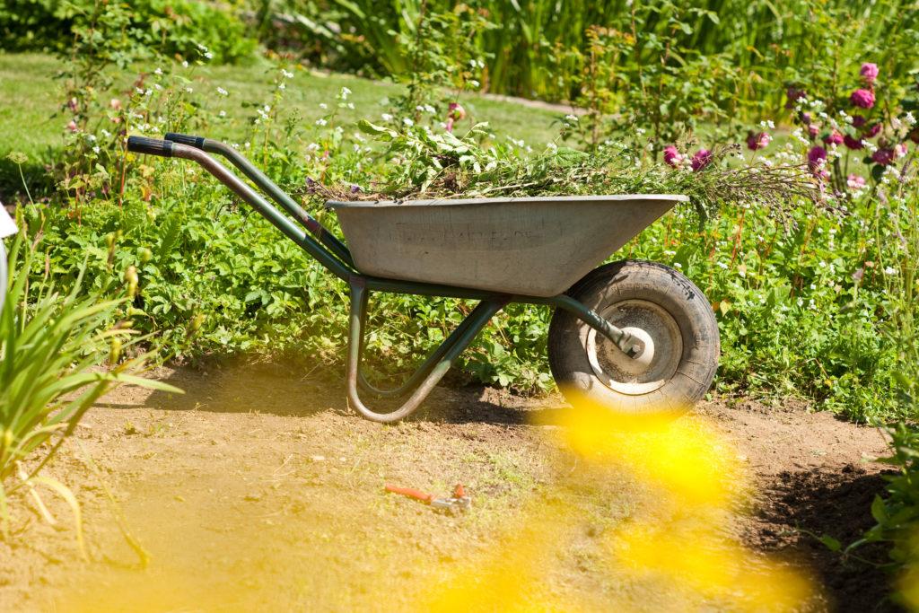Ein guter Boden: Gründüngung und Pflanzenauswahl