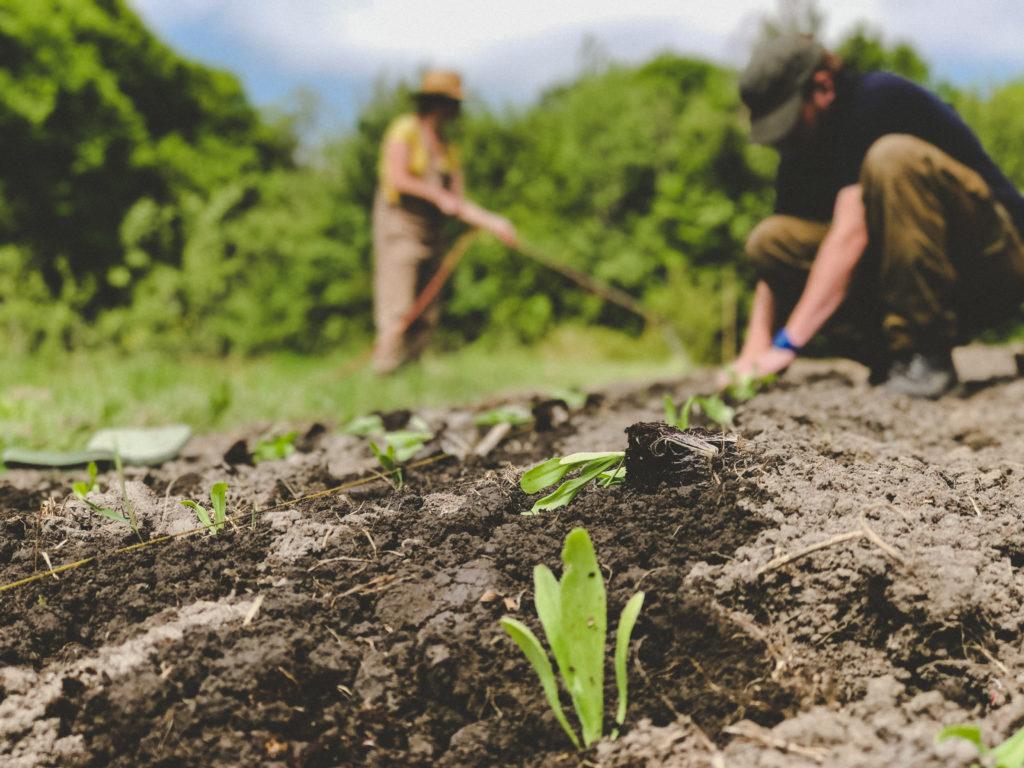Was unterscheidet Bio-Anbau von konventioneller Landwirtschaft?