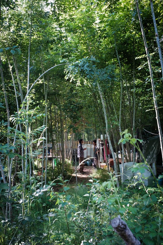 Menschen unterhalten sich in einem Wald in Albi