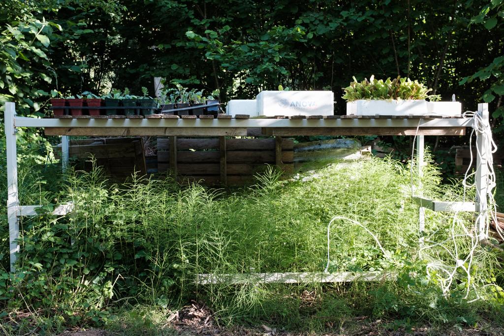 In einem Garten wachsen verschiedene Pflanzen