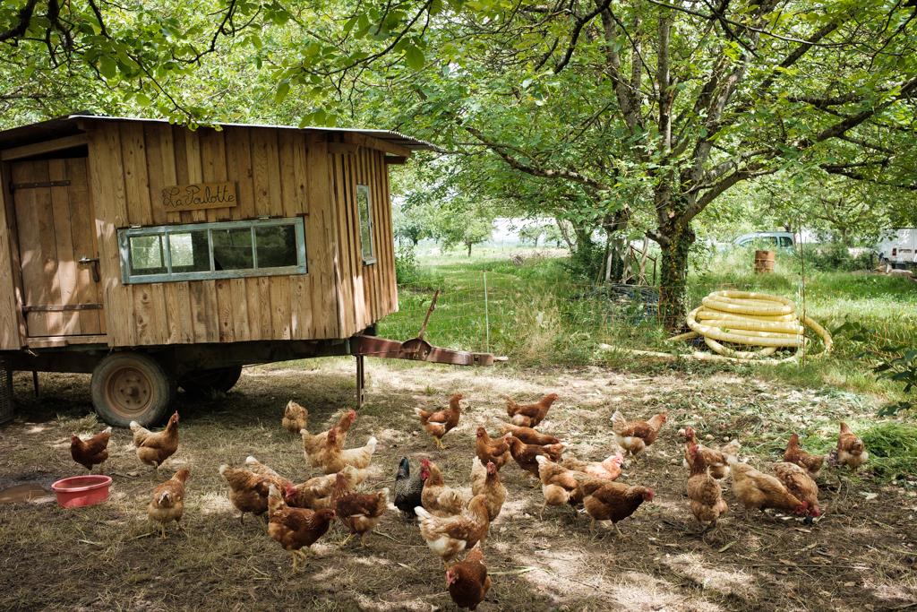 Hühner auf einer Farm im französischen Albi