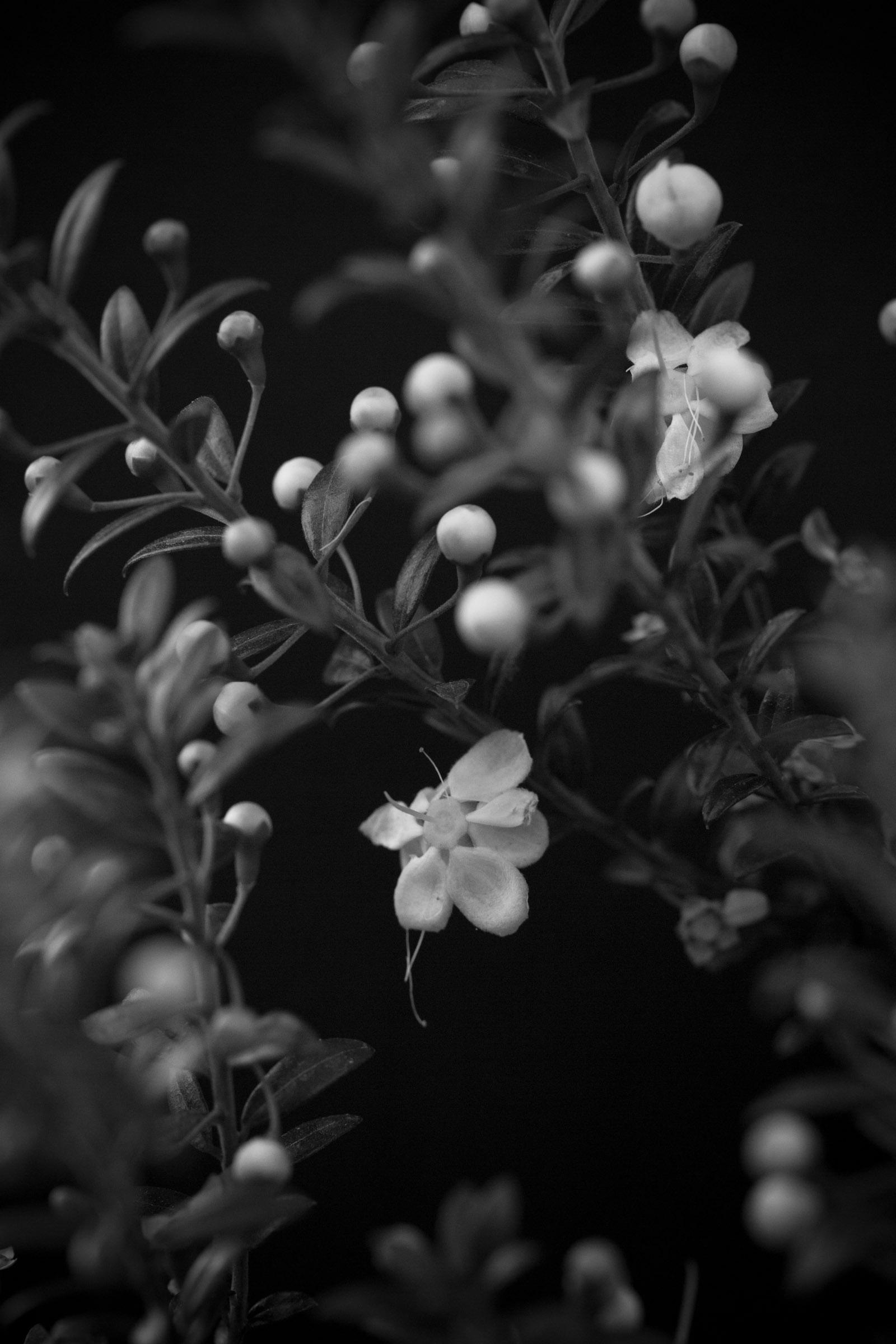Weiße Blüten blühen an einem Strauch