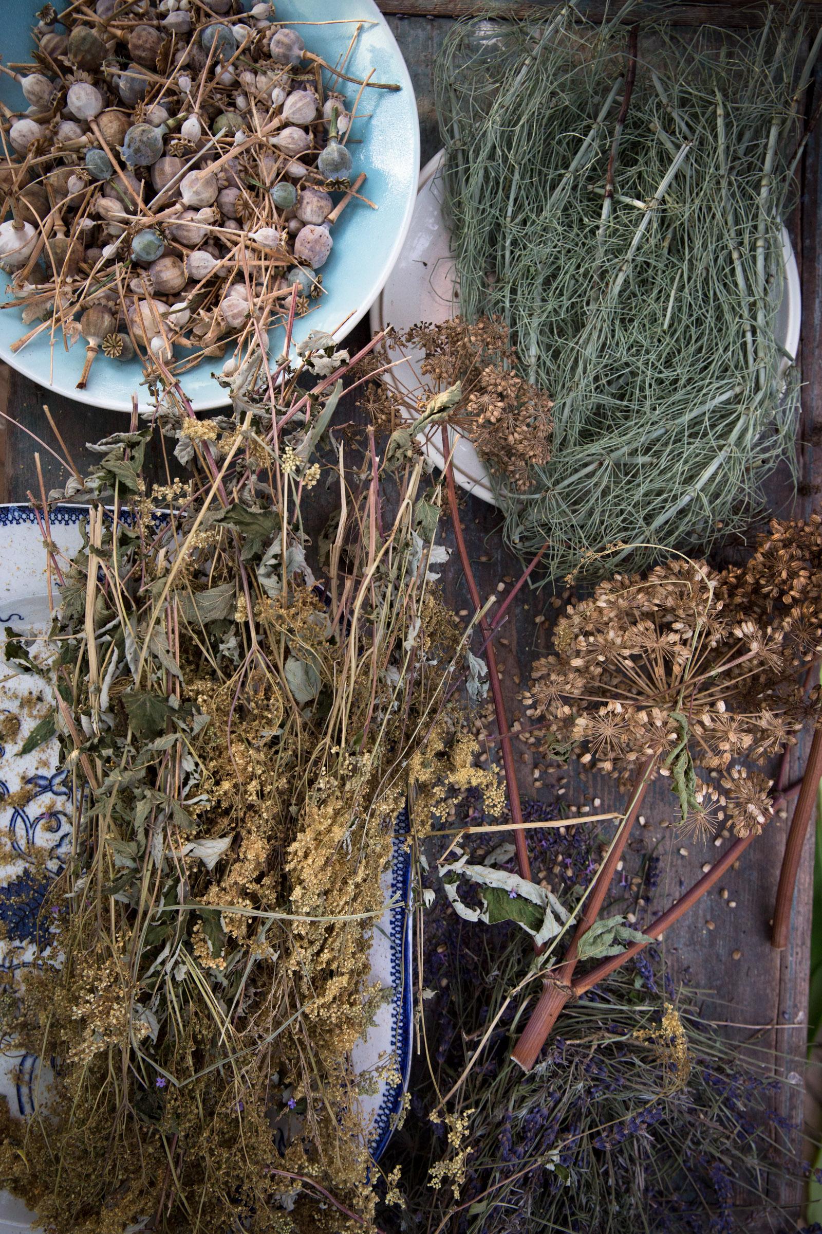 Verschiedene Gewürze und getrocknete Pflanzen