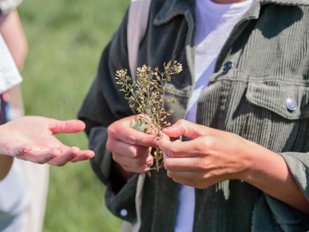 Zwei Menschen halten Wildkräuter in der Hand