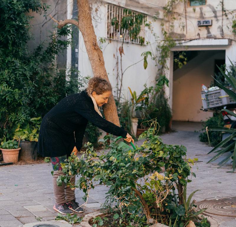 Tel Aviv City Tree