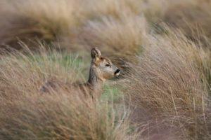 Miriam Schulz Naturpädagogin erdwege Wildnispädagogin Natur