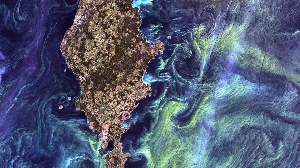 Phytoplankton Kohlenstoffsenke