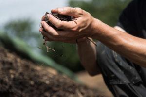 Biodiversität Erde Kompost