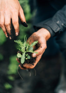 Gut Haidehof Agroforstwirtschaft