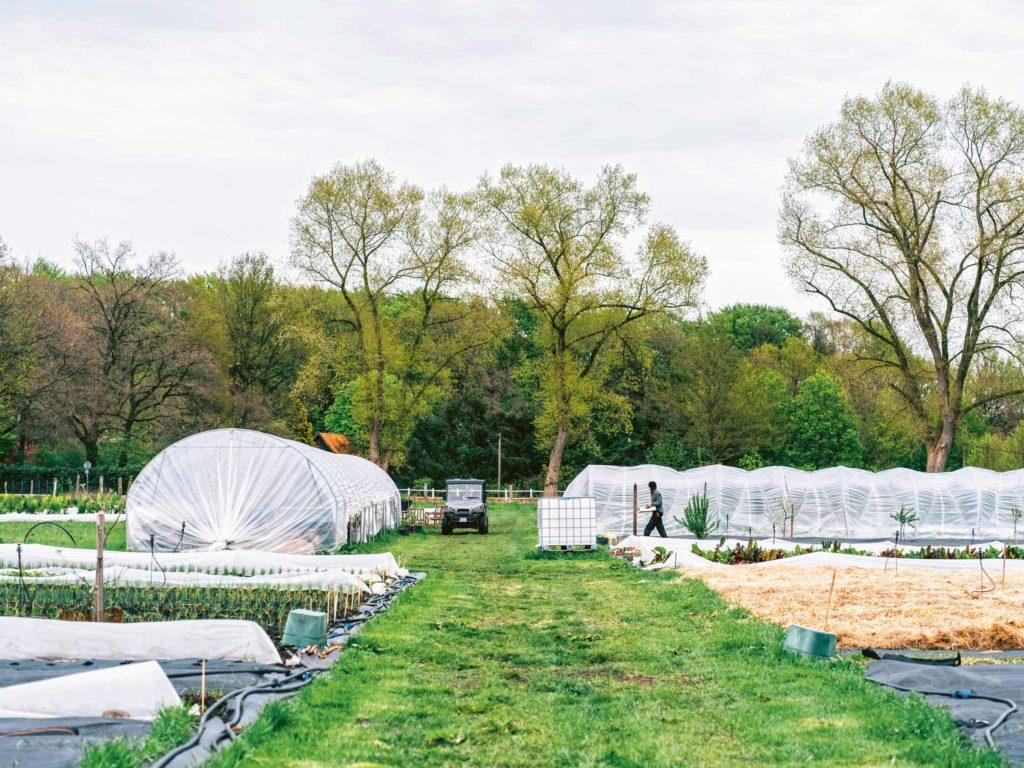 Haidehof Wald Agroforst Regenerative Landwirtschaft