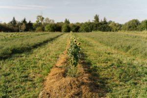 Living Soil Journey Landwirte