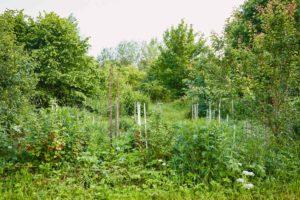 Waldgarten Schlossnickel Agroforstwirtschaft