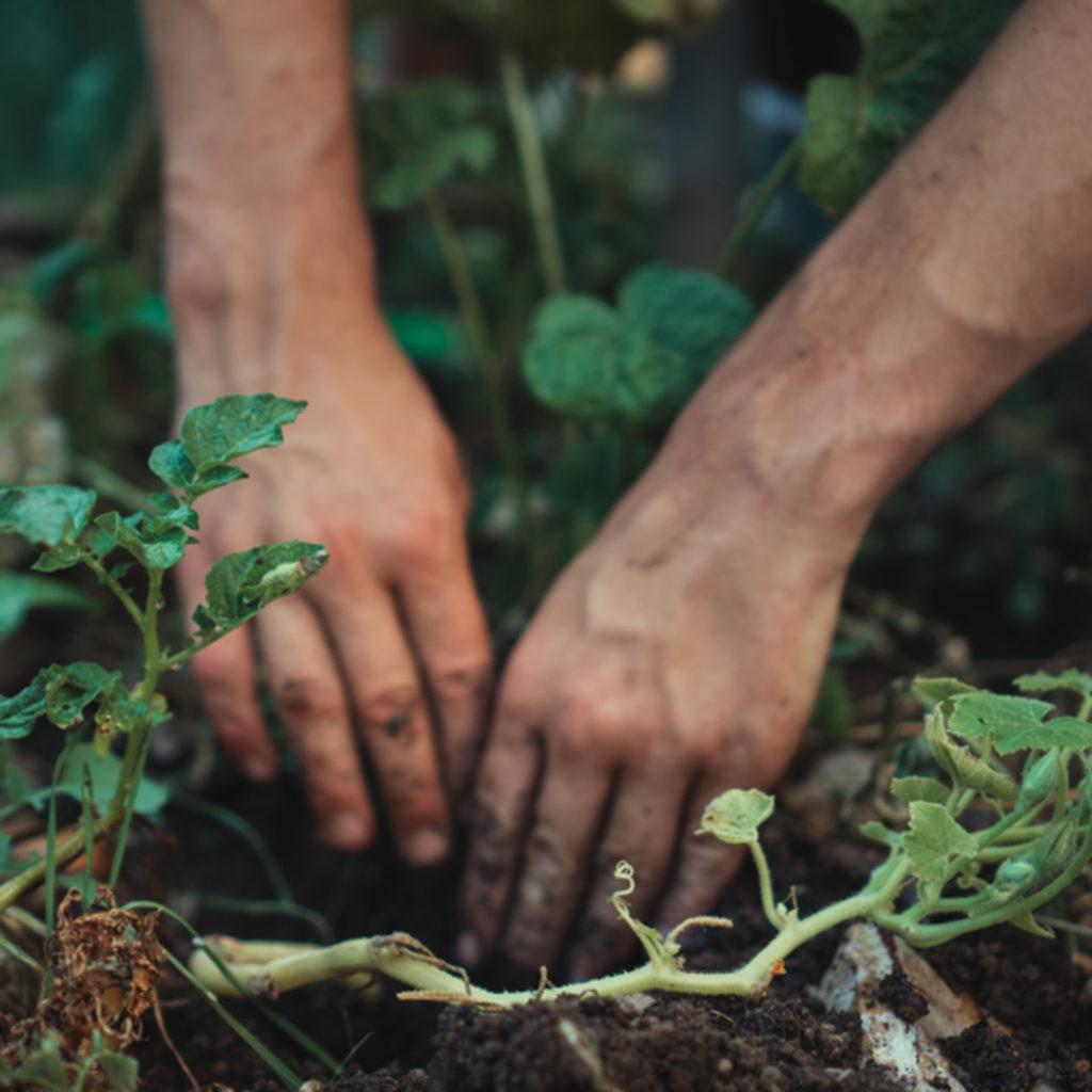 Living Soil Journey