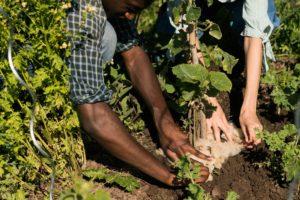 Living Soil Journey Ernährung Essen Klima Woellwarth